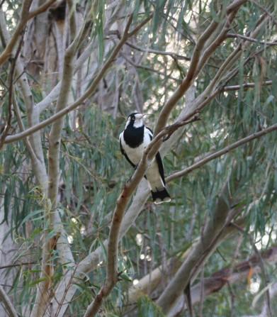 Australia 099