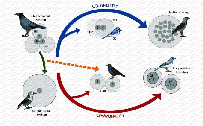 Avian Social Systems