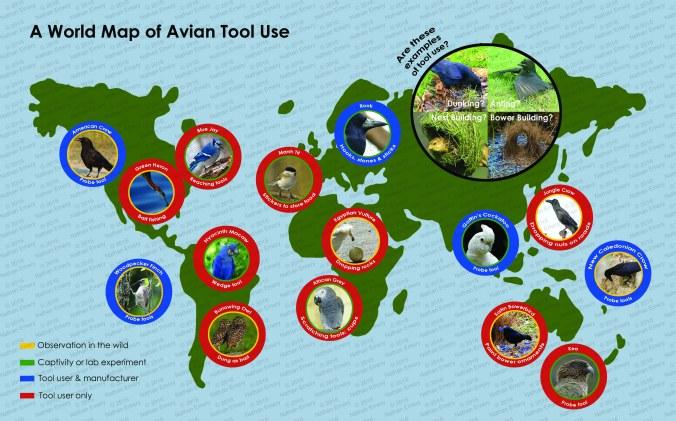 Avian Tool Use World Map