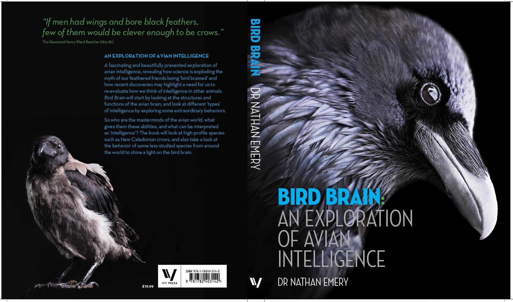 Bird Brain - Birds Of Prey