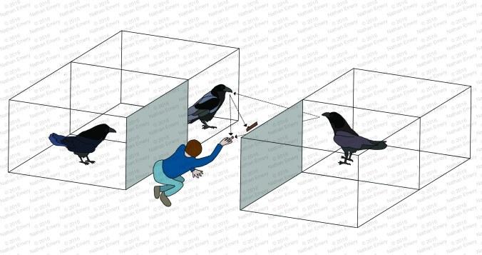 Raven Knowledge 1