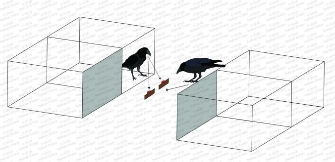Raven Knowledge 2