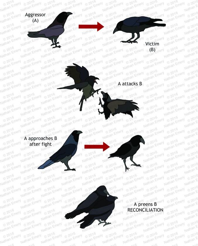 Raven Reconciliation