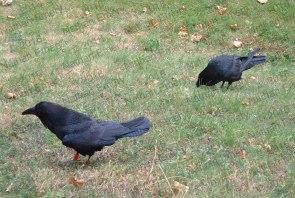 Raven Social Caching