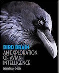 Bird Brain Cover