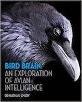 Bird Brain Cover